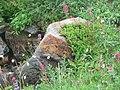 Flowers (1f0ce0f0da87437e8134e9f066fdb398).JPG