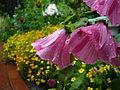 Flowers (2722299490).jpg