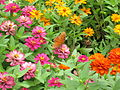 Flowers and orange butterfly.JPG