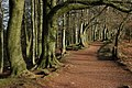Footpath through trees, Clent Hills - geograph.org.uk - 672215.jpg
