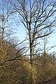 Forêt alluviale à bois dur chênes, frênes, ormes... avec une strate arbustive très riche.jpg