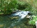 Forêt de la Robertsau-Cascade (1).JPG