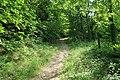 Forêt domaniale de Bois-d'Arcy 13.jpg