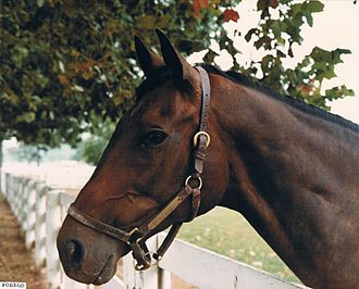 Forego - Forego at the Kentucky Horse Park in 1981