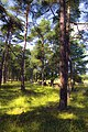 Forest, Gotland (6214598645).jpg