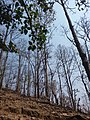 Forest at kurintar1.jpg