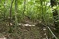 Forest in Mt.Kinoko 04.jpg