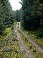 Forest track, Barr Burn Head - geograph.org.uk - 762232.jpg