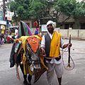 Fortune-telling bull. Hyderabad, India.jpg