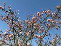 Frühling an der Alb - panoramio (4).jpg