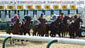 Freebets-horse-racing.jpg
