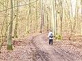 Frohnau - Waldweg (Woodland Path) - geo.hlipp.de - 32730.jpg