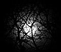 Full Moon (8231690876).jpg