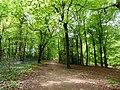 GOC Tring & Wendover Woods 025 Northill Wood, Buckland (33947204553).jpg