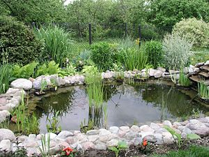 A picture of a pond in a residential garden.