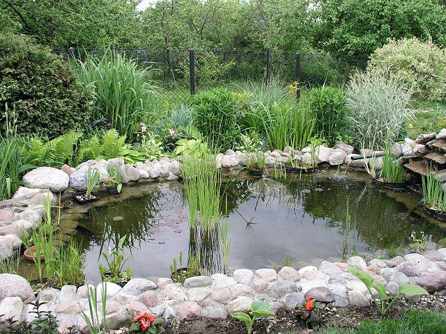 Umelé spoločenstvo - záhrada a záhradné jazierko