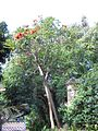 Gardenology.org-IMG 1374 rbgs10dec.jpg
