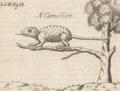 George Wheler 1682 Chameleon page 247.png