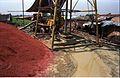 Geotechnical Investigation - Science City Site - Calcutta 1994-09-26 453.JPG