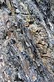 Gesteine am Ufer der Urft im Nationalpark Eifel-3524.jpg