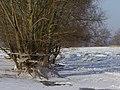Gesunkener Wasserstand 2012 - panoramio.jpg