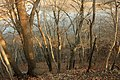 Gfp-iowa-pike-peak-state-park-looking-at-mississippi-through-trees.jpg