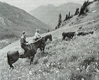 Gifford Pinchot National Forest - A U.S. Forest Service ranger and cattle grazer permittee on a hillside with cattle in Gifford Pinchot National Forest, Washington in 1949