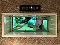 Ginza Utility Tunnel (49429801601).jpg