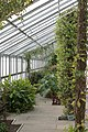 Glasshouse at Temple Newsam - geograph.org.uk - 1370603.jpg
