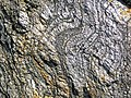 Gneiss (Archean; Norris South roadcut, Madison County, Montana, USA) 6 (44803635014).jpg
