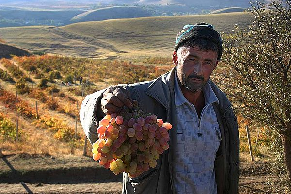 Grape Grower Tajikistan (babasteve - flickr).jpg
