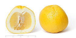 Grapefruit and cross section edit scale.jpg