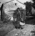 """Grdevič Tereza, Golac 41, pri Jeckovih, nosi frašče in """"plivel"""" ter krompir in motiko v košu in srp, oprčena z """"užajc?m"""" (štrikom) 1955.jpg"""