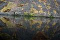 Great reflection 1 (3323034605).jpg