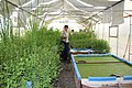 Green Age Aquaponics - Armenia 03.jpg