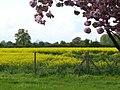 Green Belt, Felthamhill - geograph.org.uk - 785525.jpg