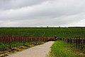 Groot Constantia - panoramio (4).jpg