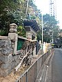 HKU 港大 near 香港島 半山區 Mid-Levels 般咸道 Bonham Road 老榕樹 old banyan trees May 2018 LGM 樹木辦 after cutting 修前後 09.jpg
