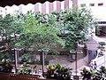 HK 灣仔 Wan Chai 春園街 Spring Garden Lane Wu Chung House garden trees September 2019 SSG 28.jpg