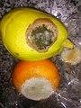 HK 生果 Fruits 發霉 Mold 柑桔 orange 梨 Pear Feb-2018 Lnv2 04.jpg