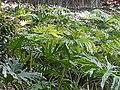 HK SW 上環 Sheung Wan 卜公花園 Blake Garden flora green leaves April 2020 SS2 02.jpg