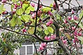 HK YL 元朗 Yuen Long 大陂頭休憩花園 Tai Pei Tau Rest Garden trees flowers Feb 2017.jpg