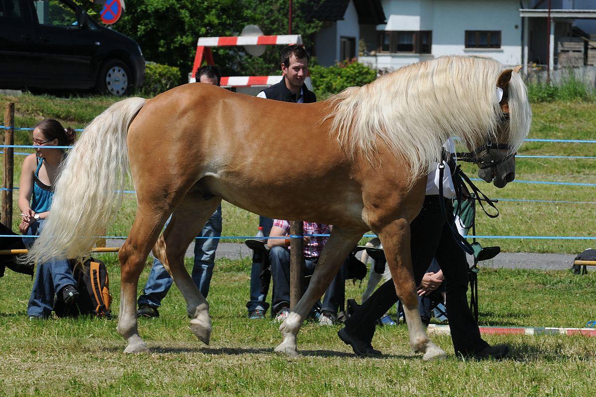 Bionda coda di cavallo - 3 4