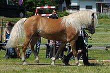 Bionda coda di cavallo - 3 5