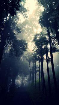 Happy Valley Tea Estate Darjeeling.jpg