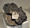 Harvard Museum of Natural History. Galena. La Clede Mine, Picher, Ottawa Co., OK (DerHexer) 2012-07-20.jpg