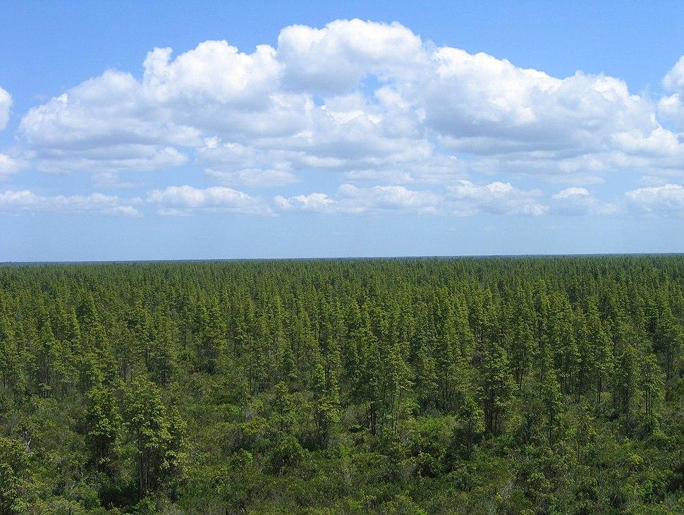 Healthy pocosin wetlands (7537178348)