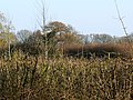 Hedge, fence and woodland south of Minety - geograph.org.uk - 1234612.jpg