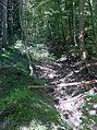 Hegibach - Wald.jpg