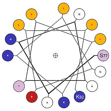 helical wheel wikivisually : helical wheel diagram - findchart.co